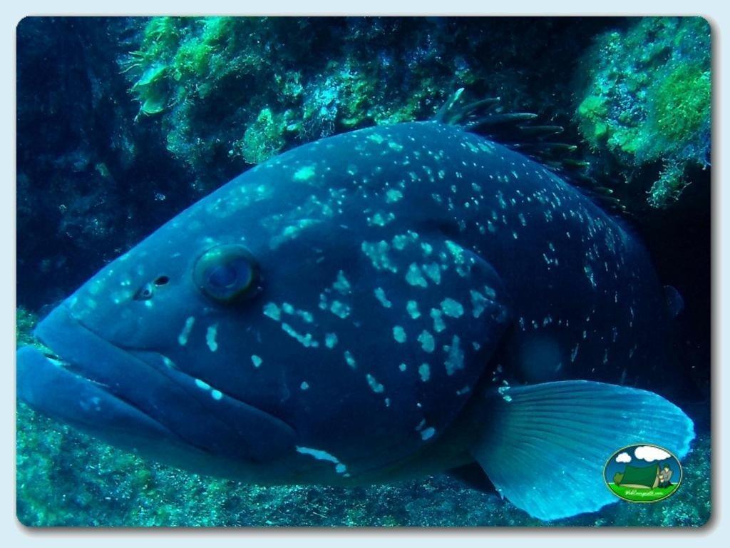 foto - Submarinismo
